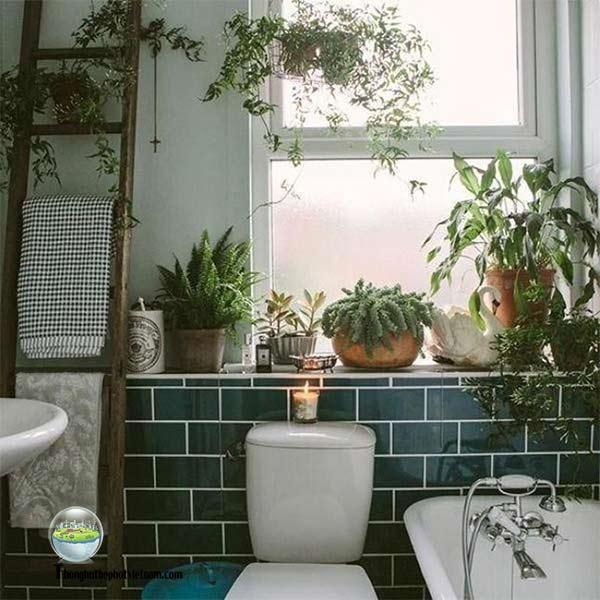 Xử lý khử mùi hôi nhà vệ sinh bằng Trồng Cây Xanh.