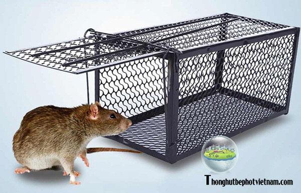 Dùng lồng sắt để bẫy chuột.