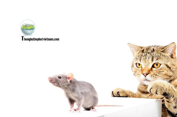Dùng con mèo để đuổi chuột ra ngoài.