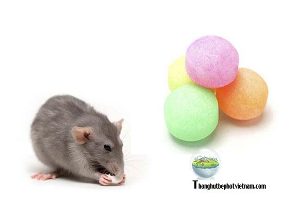 Dùng băng phiến( long não ) để đuổi chuột.