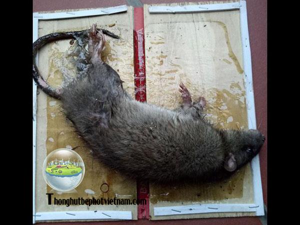 Dùng băng keo để dính chuột.